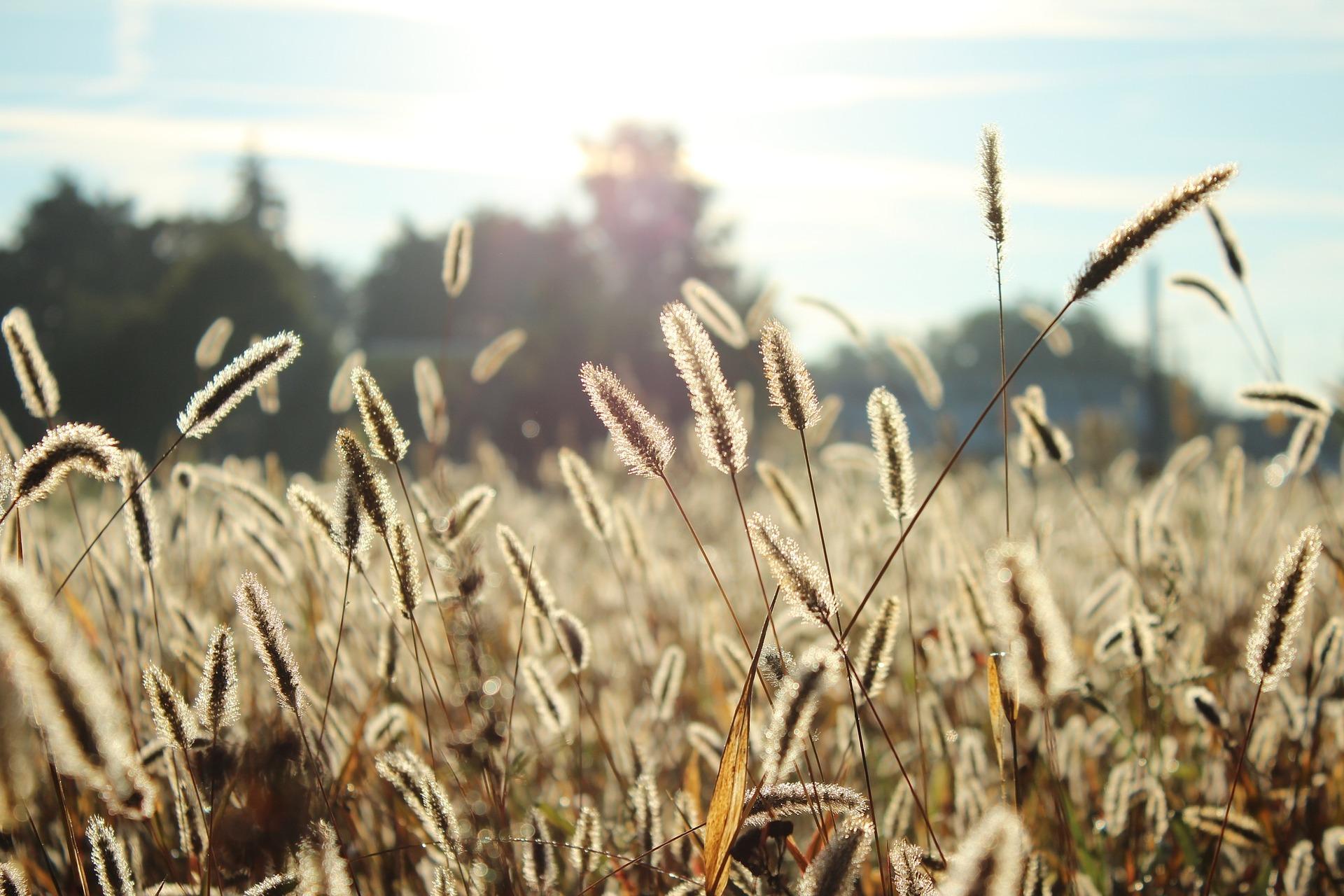 Allergies et Microkinésithérapie